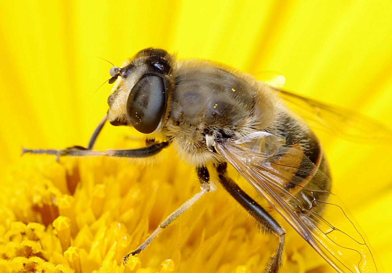 【ちょっと、この記事が面白い】ミツバチにもアスペルガーが?社会性に乏しいミツバチに人間の自閉スペクトラム症に似た遺伝症状を確認(米研究)