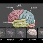 脳を構造部位に分類し、立体表示する無償アプリ「3D Brain」がすごい!!