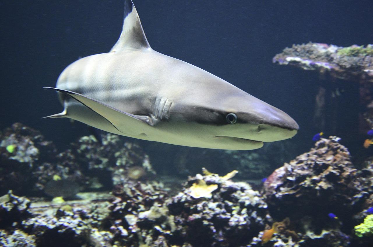 【書籍紹介】 進化の法則は北極のサメが知っていた 渡辺佑基 (著)