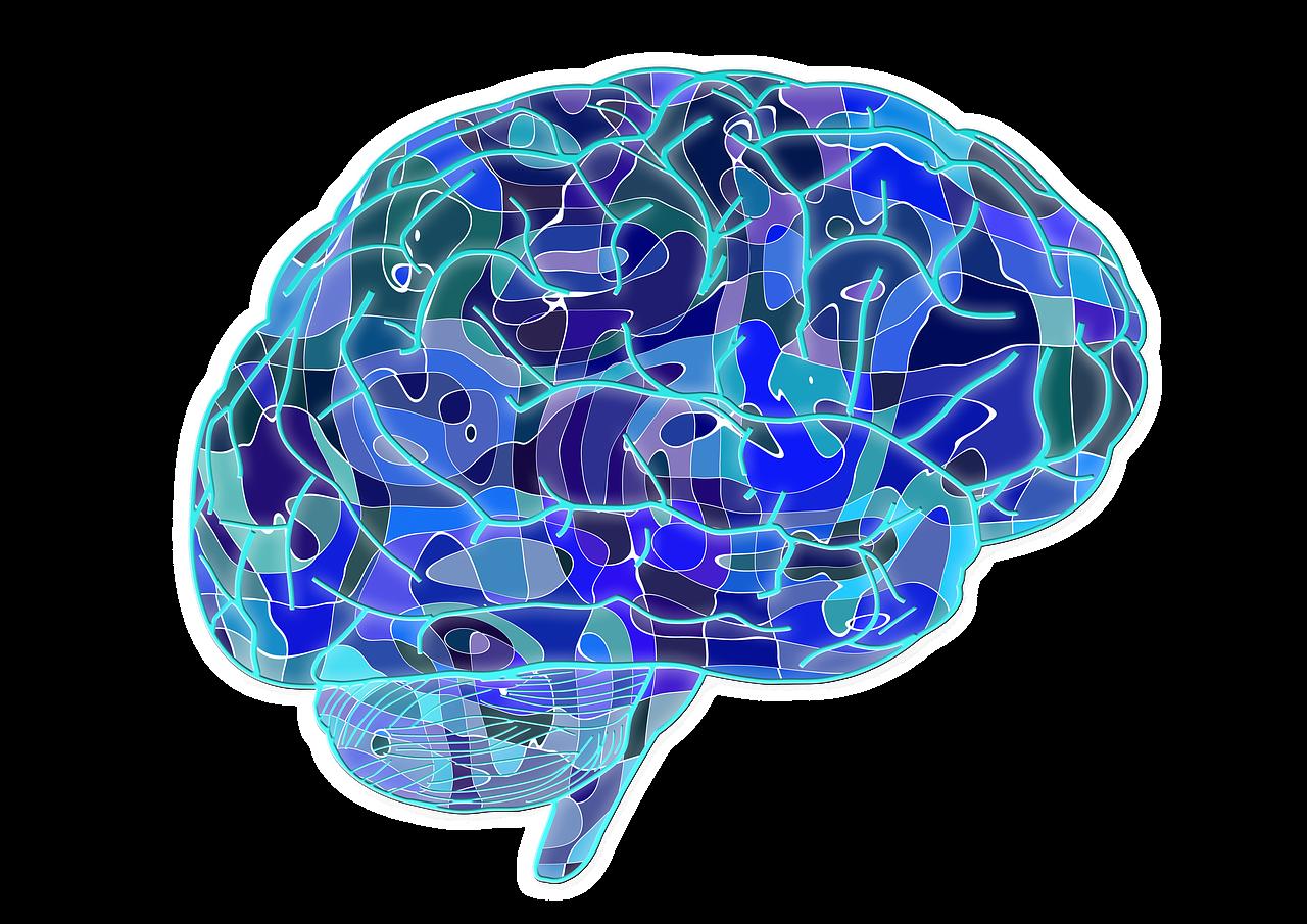 【第2回目】人間の「脳」に関する面白い記事を見つけましたので、ちょっと紹介します。